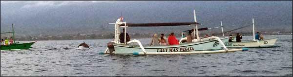 Paket dolphin Lovina